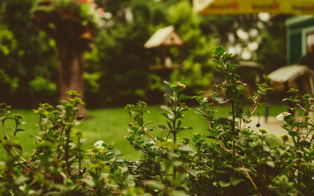 Que prévoit la loi sur le jardinage